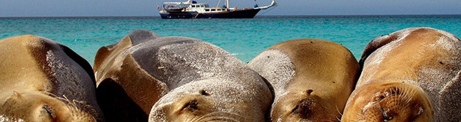 Fascinating Galapagos Islands Cruise aboard the Beagle picture