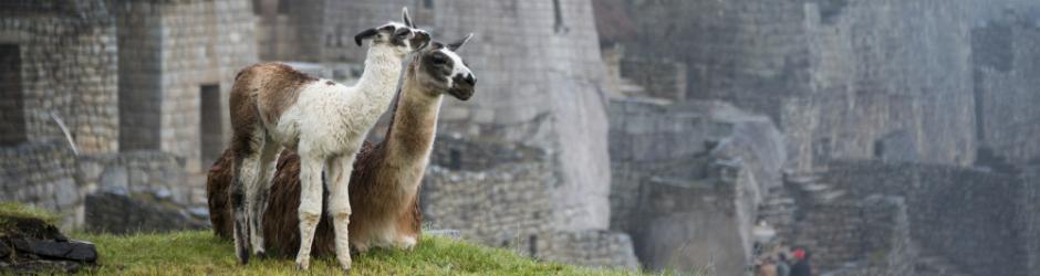 Peru Travel - Taste of Peru Tour picture